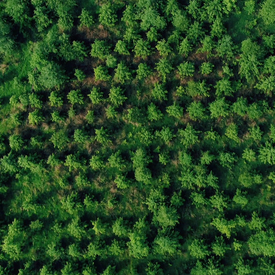 Aerial photograph of a forest taken from a drone